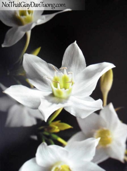 Tranh dán tường Komar (Đức) 4-259 | Hoa trắng đẹp lãng mạn