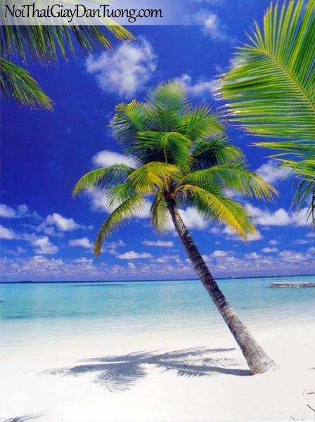 Tranh dán tường Komar (Đức) 4-883 | Hàng dừa xanh bên bờ biển