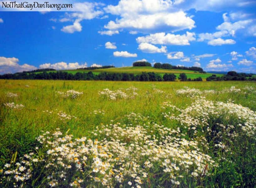 Tranh dán tường Komar (Đức) 8-254 | Thảo nguyên xanh tận chân trời