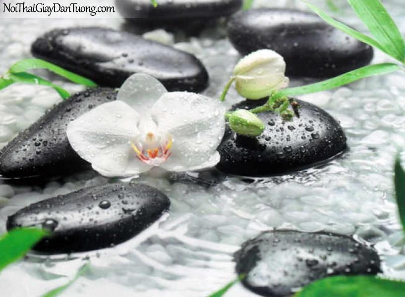 Tranh dán tường Komar (Đức) 8-319 | Hoa nở trên đá, spa