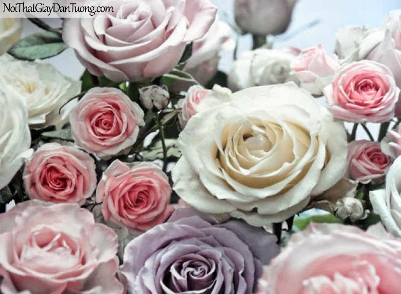 Tranh dán tường Komar (Đức) 8-736 - Hoa hồng đẹp lãng mạn