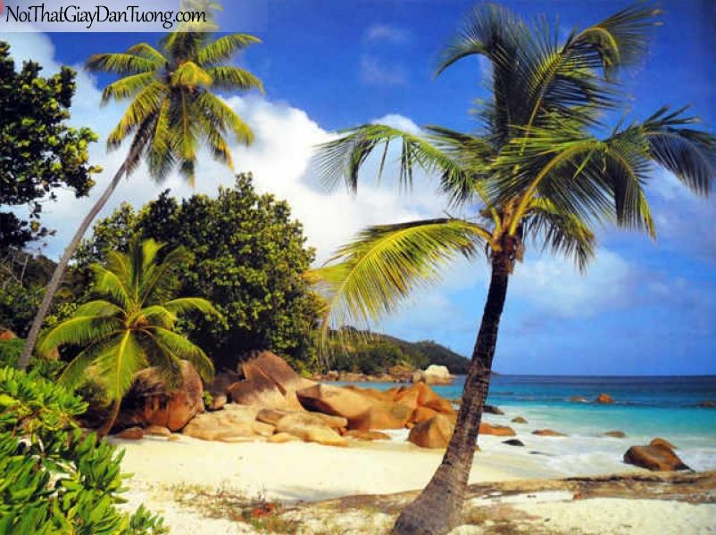 Tranh dán tường Komar (Đức) 8-885 - Bờ biển đẹp, dừa xanh ngát