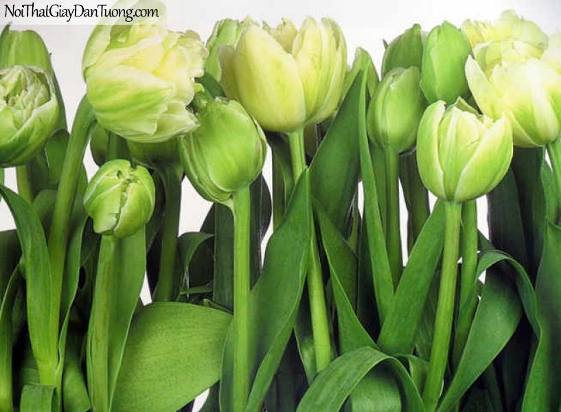 Tranh dán tường Komar (Đức) 8-900 - Hoa tulip