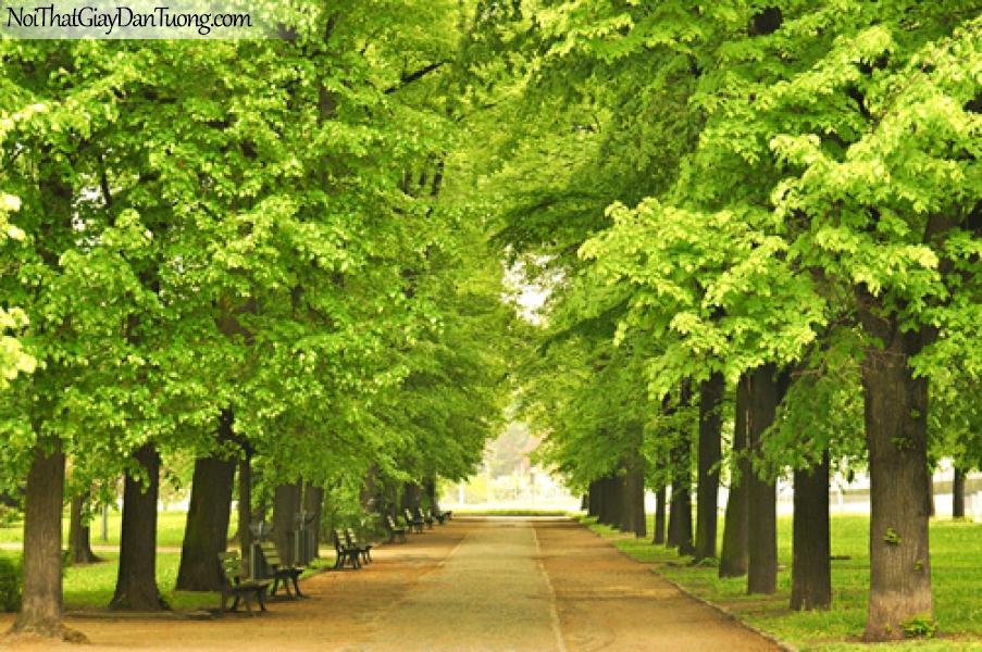Tranh dán tường con đường hàng cây