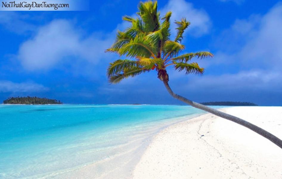 Tranh dán tường | dừa trên bãi cát vươn mình ra biển