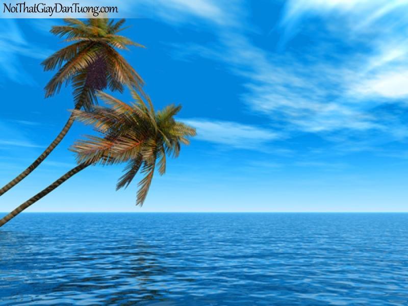 Tranh dán tường | dừa vươn mình ra biển