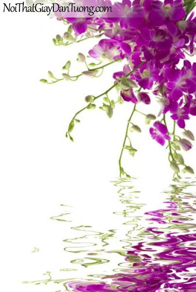 Tranh dán tường | những cành hoa lan tím soi bóng nước