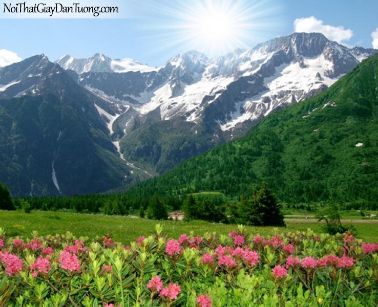Tranh dán tường Núi và hoa