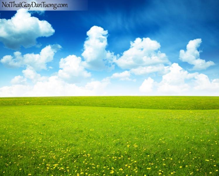 tranh dán tường, cánh đồng hoa lãn mạn