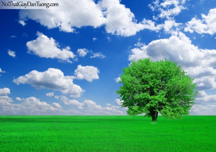 Tranh dán tường, bầu trời xanh, đồng cỏ xanh, cây xanh DA0023