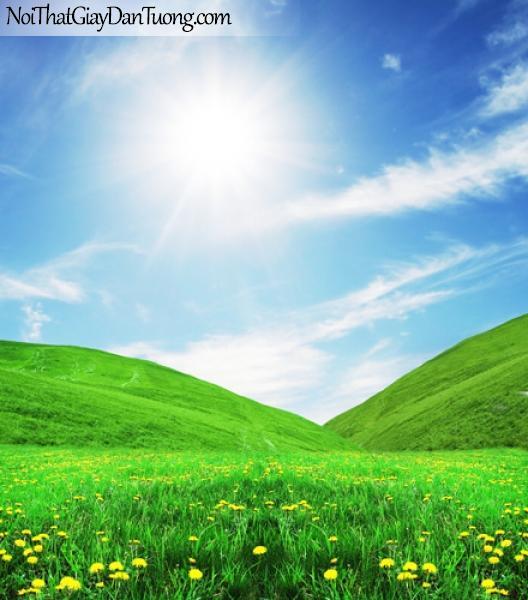 tranh dán tường, màu xanh của cỏ, hoa và bầu trời DA0021