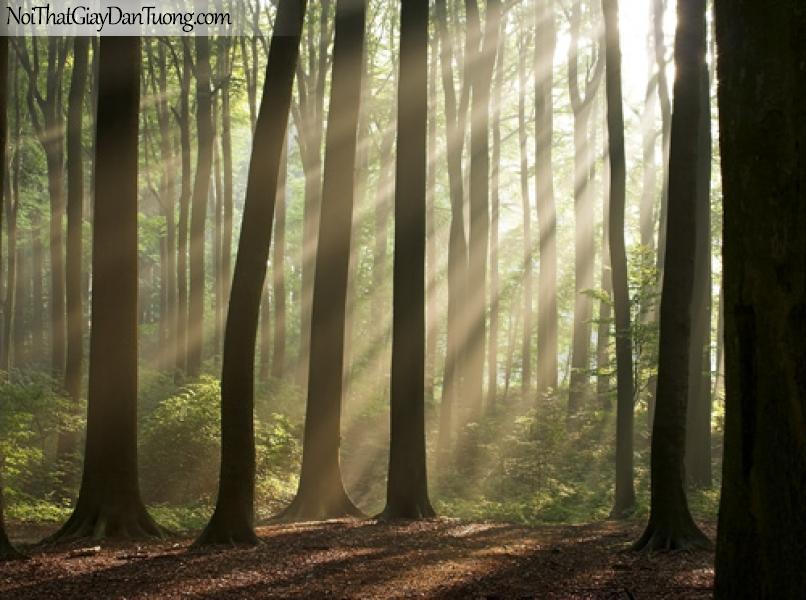 tranh dán tường, khu rừng mù sương và những tia nắng của buổi bình minh DA0037