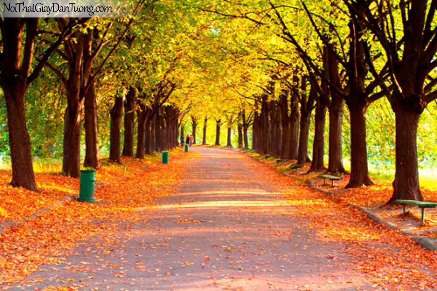 Tranh dán tường, còn đường, hàng cây và lá vàng mùa thụ rụng DA0051