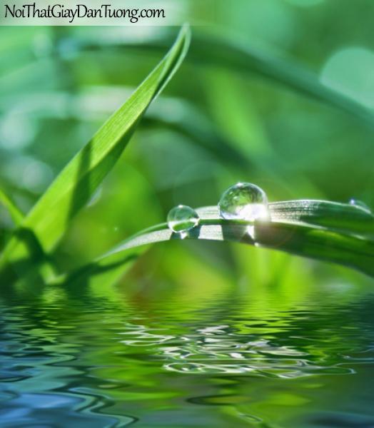 Tranh dán tường, màu xanh của cỏ cây và nước