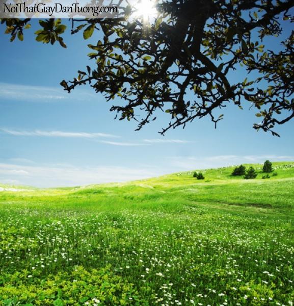 Tranh dán tường, bầu trời, cánh đồng hoa DA0080