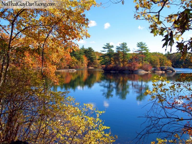 Tranh dán tường, cảnh sông nước, lá vàng mùa thu DA0085