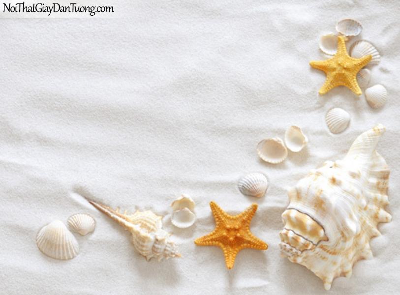Tranh dán tường bãi biển đẹp, vỏ ốc hến sò sao biển