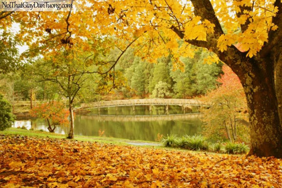 Tranh dán tường, cây cầu hồ nước và là vàng rụng giữa mùa thu DA0098