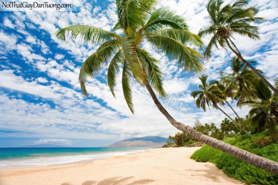 Tranh dán tường đẹp, trời xanh, bóng dừa, biển ngọc