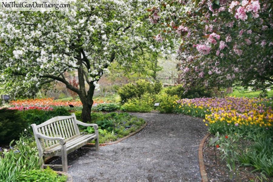 Tranh dán tường, lối đi trong vườn và có cây hoa lá DA0099
