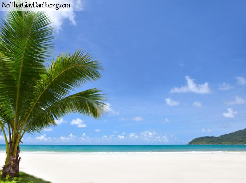 Tranh dán tường mùa xanh biển dừa