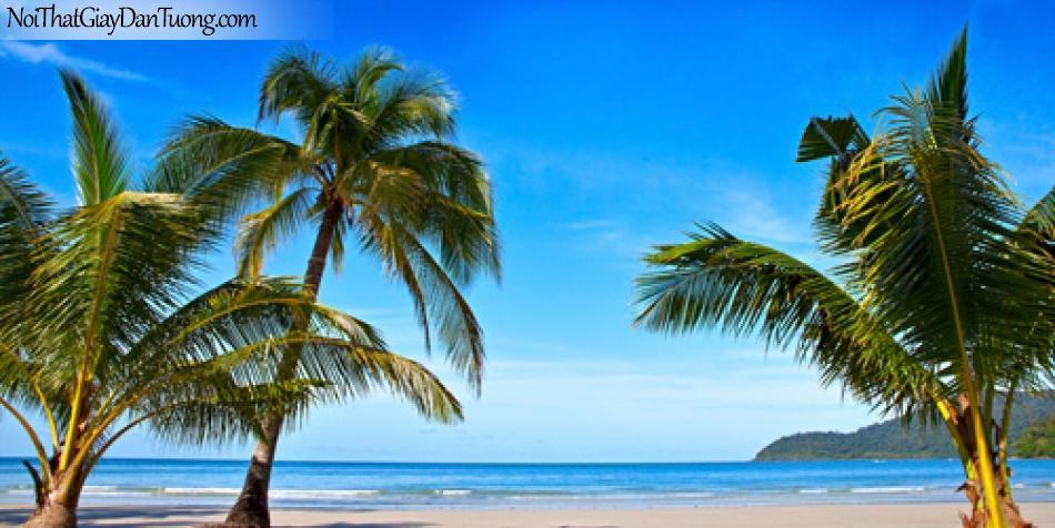 Tranh dán tường, những tán lá dừa phơi mình bên biển