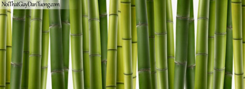 Tranh dán tường, thân cây tre, thân cây trúc DA0096