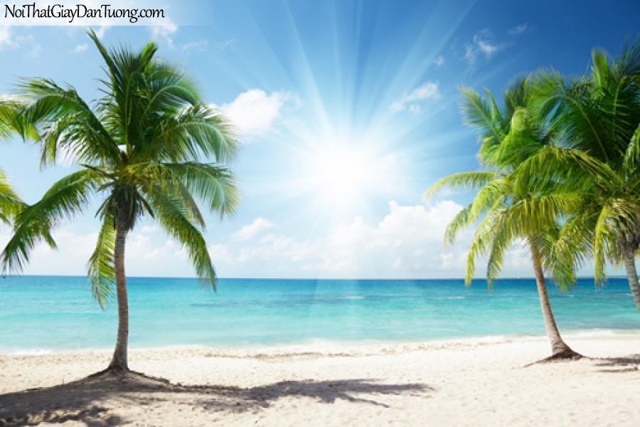 DA1033 - tranh dán tường, Bóng dừa bên biển xanh, bờ cát trắng lung linh