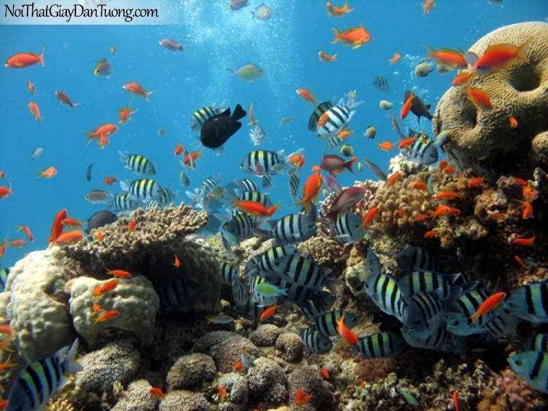 DA1124 - Biển - san hô - cá tôm như thiên đường dưới nước