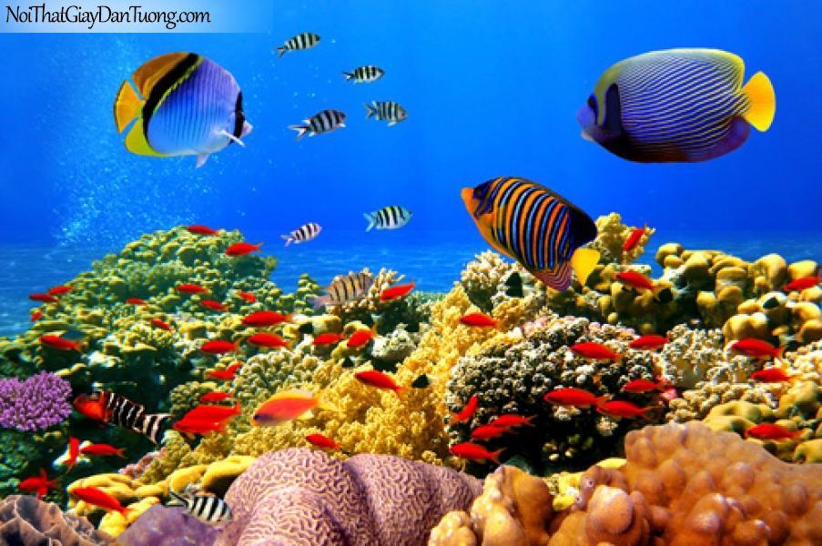 DA1142 - Sắc màu biển cả, bức tranh đẹp lung linh