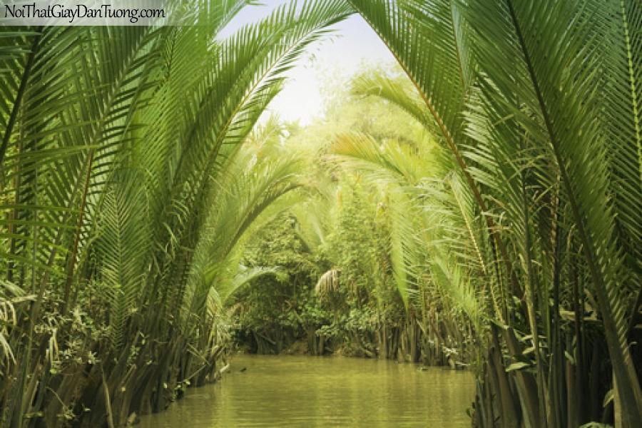 Tranh dán tường, cảnh dừa nước vùng đồng bằng sông cửu long DA0109