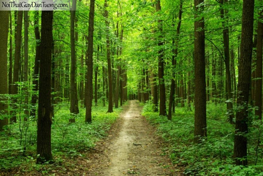 Tranh dán tường, đường mòn trong rừng xanh DA0116