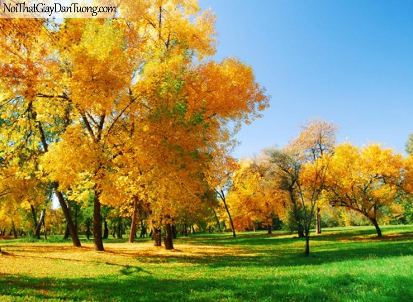 Tranh dán tường, mùa thu lá vàng rơi DA0117