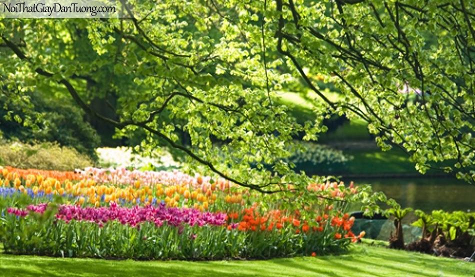 Tranh dán tường, cỏ cây hoa lá ao cá DA0135