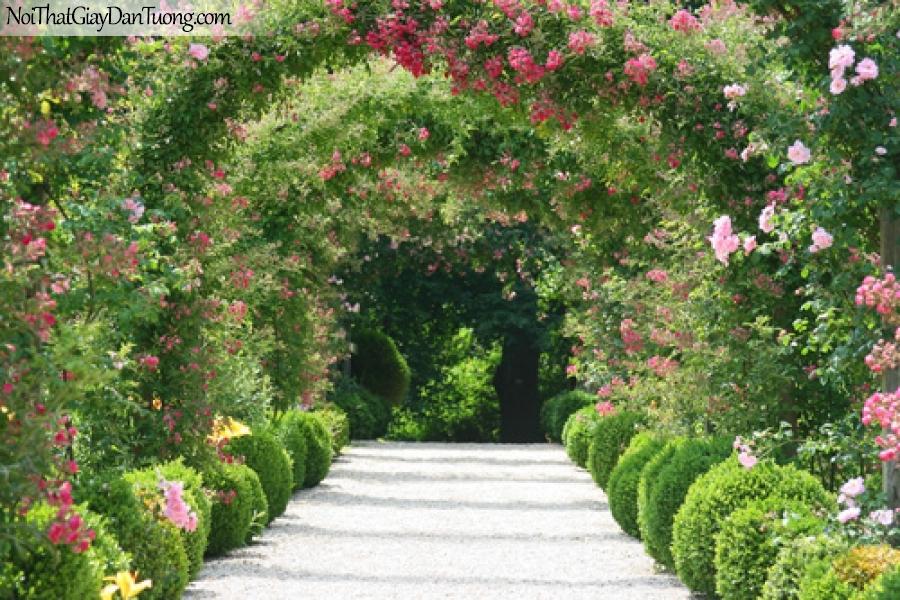 Tranh dán tường đường hoa tuyệt đẹp DA0137