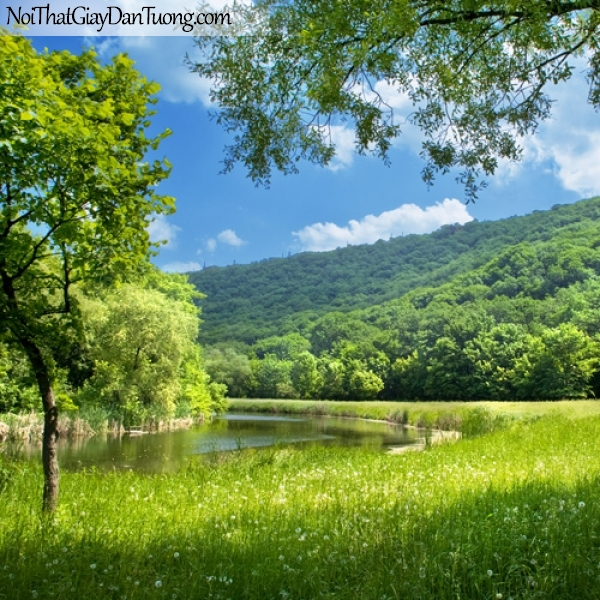tranh dán tường, hồ cá cỏ cây DA0140