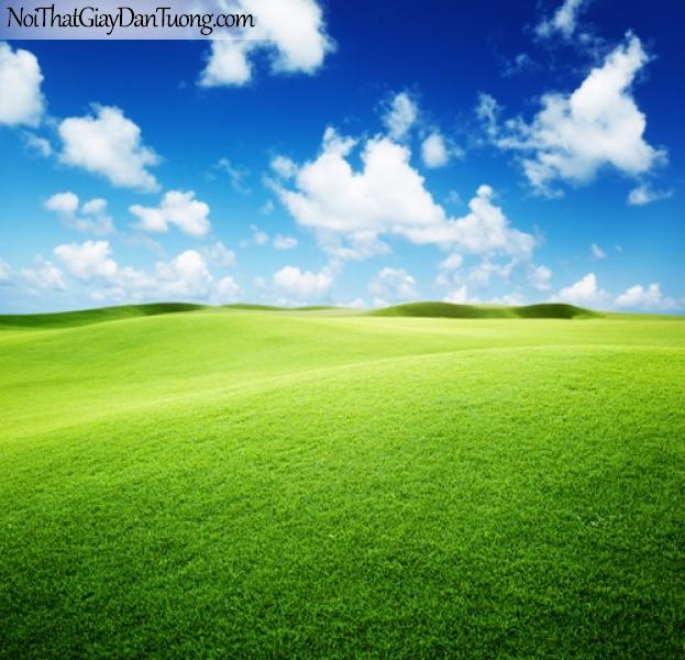 Tranh dán tường, bầu trời và thảm cỏ xanh mượt DA0167