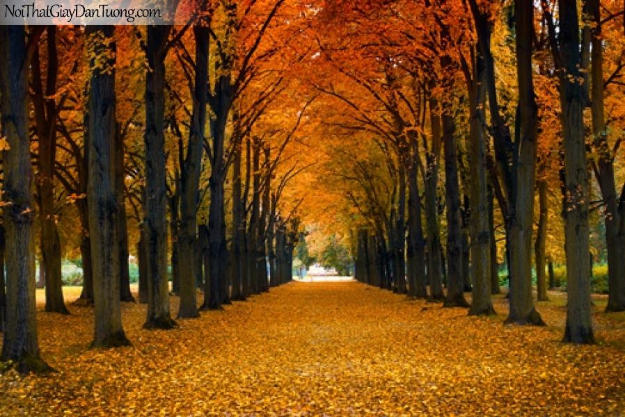 Tranh dán tường hai hàng cây trải đầy lá vàng rơi DA0168