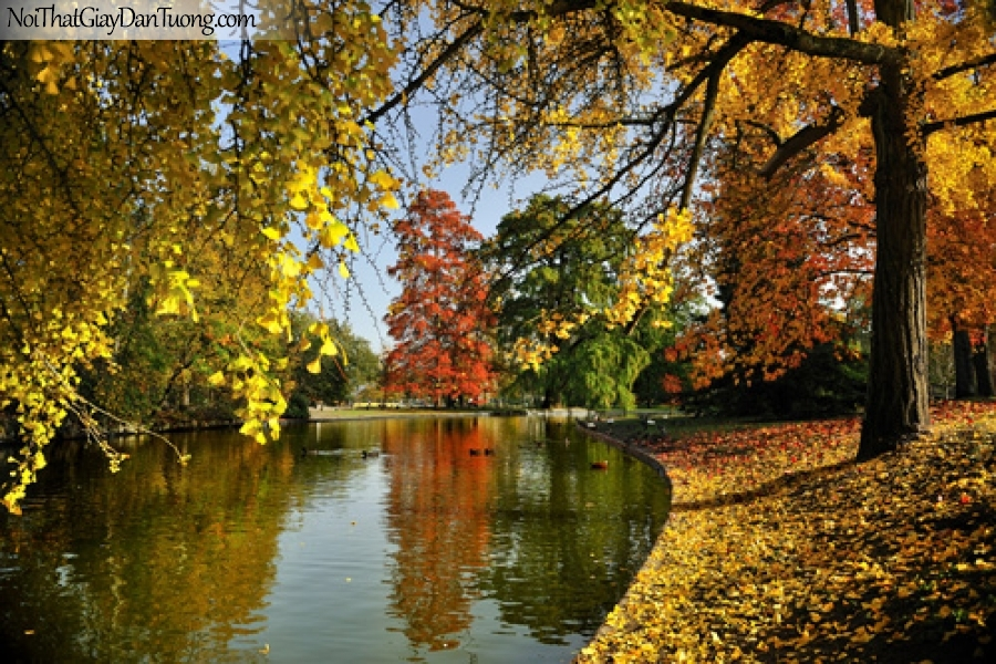 Tranh dán tường, hồ nước tỉnh lặng của mua thu lá rụng DA0169