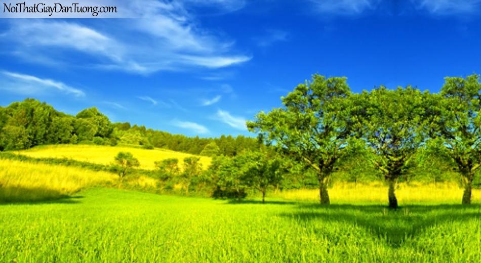 Tranh dán tường, màu xang của trời, màu vàng của cỏ DA0175
