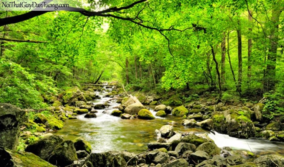Trang dán tường, rừng xanh nước suối trong DA0190