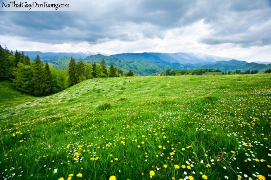 Tranh dán tường, hoa nở trên đồi cao hùng vĩ DA0207