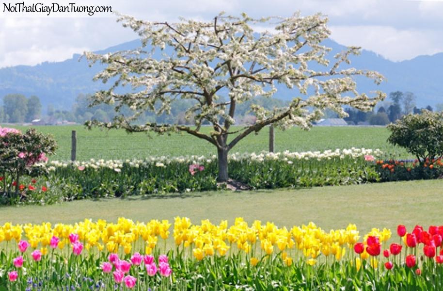 Tranh dán tường, mùa thu hoa đua nhau nở DA0201