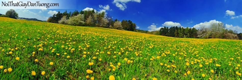 Tranh dán tường,ngắm hoa nở trên đồi thảo nguyên DA0215
