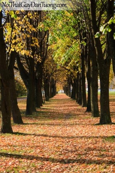 Tranh dán tường, hàng cây mùa thu là rời DA0227