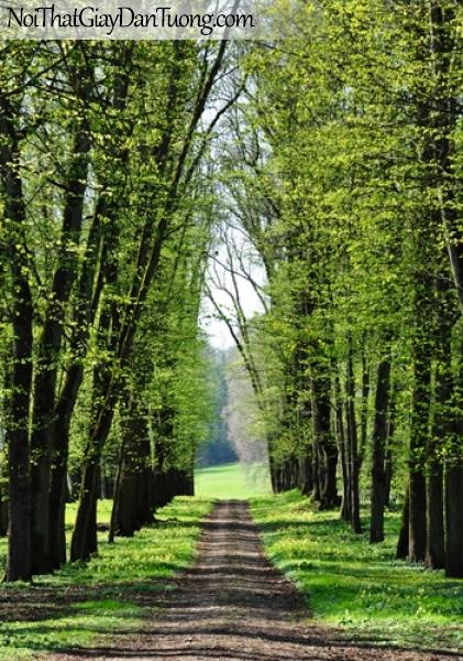 Tranh dán tường, hàng cây và con đường DA0236