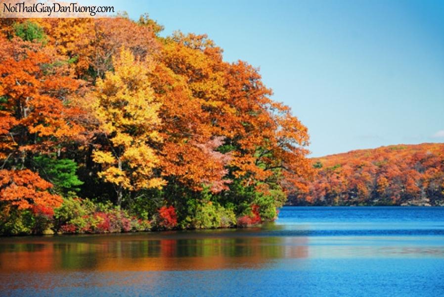 Tranh dán tường, hồ nước và hàng cây là vàng DA0223