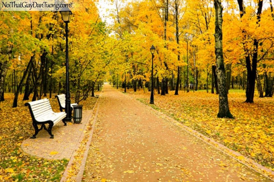 Tranh dán tường, mùa thu là vàng rời DA0234