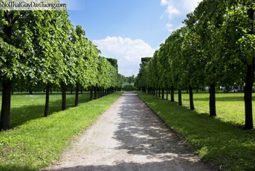 Tranh dán tường, những cây xanh và con đường DA0243