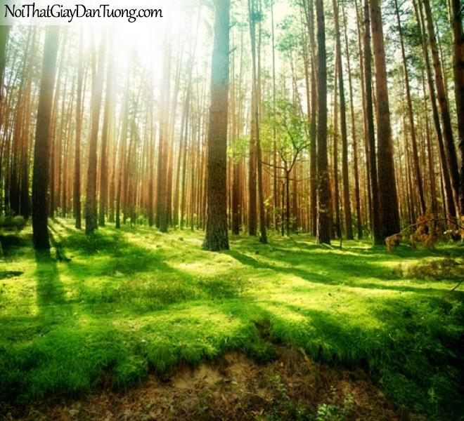 Tranh dán tường, ánh nắng dưới những hàng cây DA0265